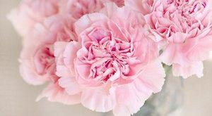 welke bloemen