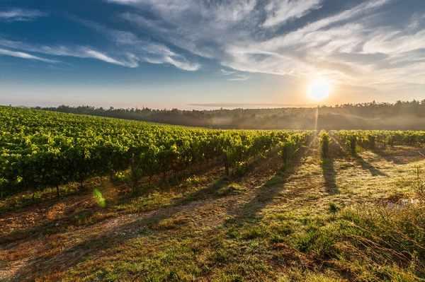 5 mooie wijnroutes in Frankrijk