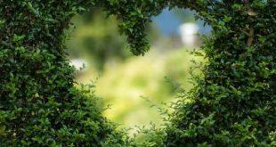 onderhoudsvriendelijk tuinplan