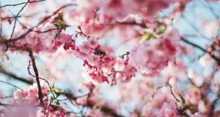 Tuinieren en klusjes in het voorjaar